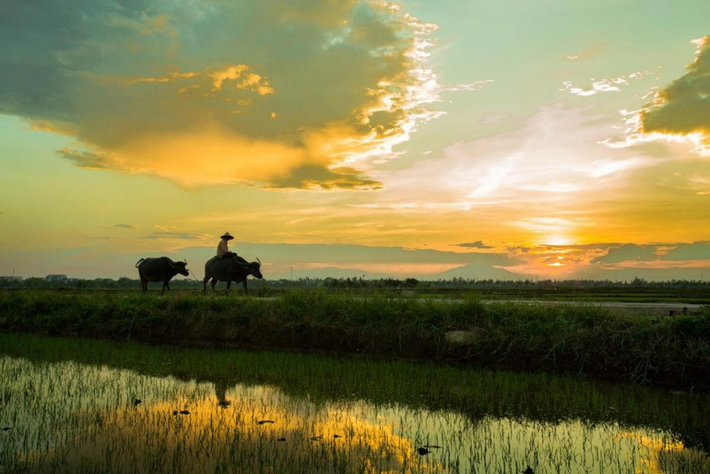 Hoi An countryside tour